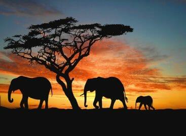 Safari, vulcani e lodge: un continente nelle proposte dei t.o.