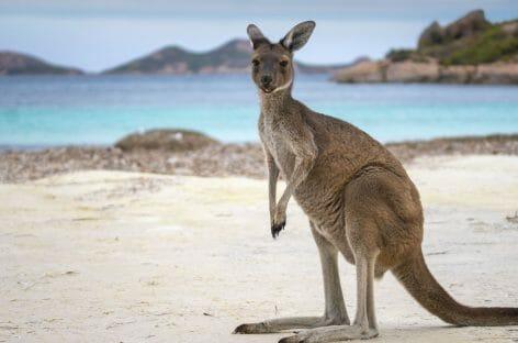 Amo il Mondo pubblica il catalogo Australia e Oceano Pacifico