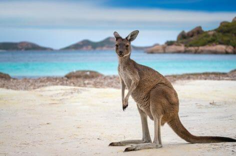 L'Australia stanzia 76 milioni di dollari per salvare il turismo
